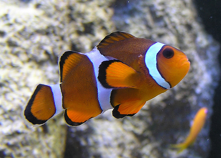 In many species, gender is a variable trait. This is the case with the clownfish, which is why we chose this non-human animal as our logotype: to point out the intersection between gender and species.